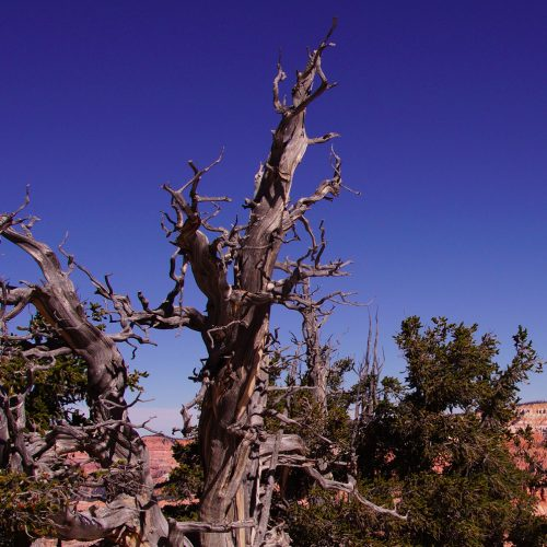 Bristlecone-Real-Estate-2016-500x500