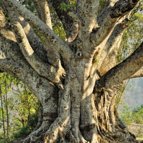 photodune-10270540-old-tree-m-500x500