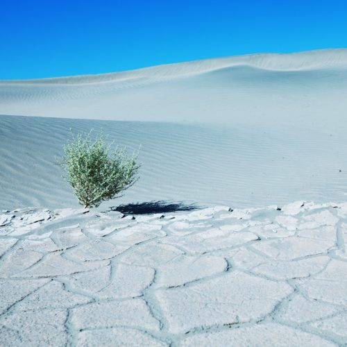 photodune-1435157-desert-m-500x500